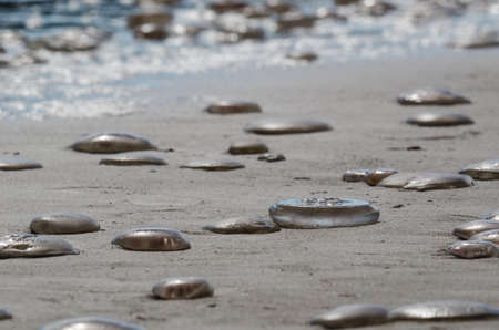 JELLYFISH - Sea creatures on the beach