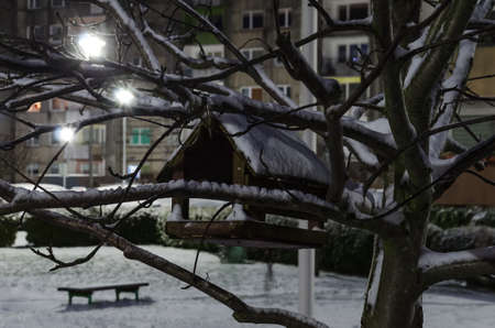 WINTER ATTACK - A bird feeder in the city, on a local tree