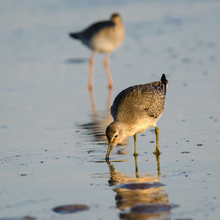 CHARADRIIFORMES - Wild birds on the sea beach 免版税图像