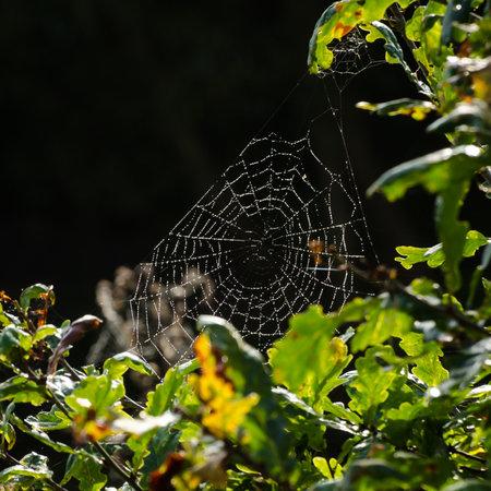 COBWEB - Spider web in the sunshine