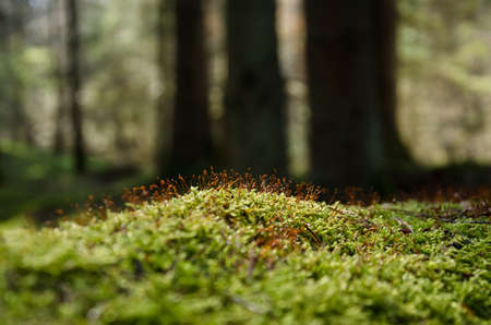 BLOOMING MOSS - A forest glade in the rays of the sun