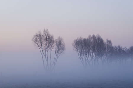 TREES IN THE FOG - A picturesque morning over the meadows 免版税图像