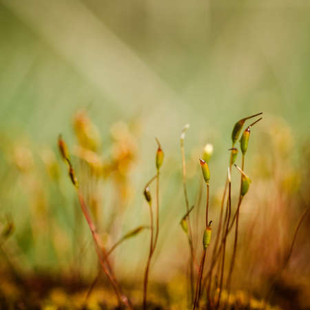 BLOOMING MOSS - A forest glade in the rays of the sun 版權商用圖片 - 168070484