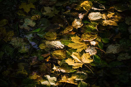 AUTUMN LEAVES - A colorful season on the river in the sunshine Standard-Bild