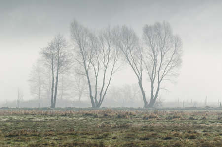 MISTY TREES - A cool spring morning on the meadow Standard-Bild