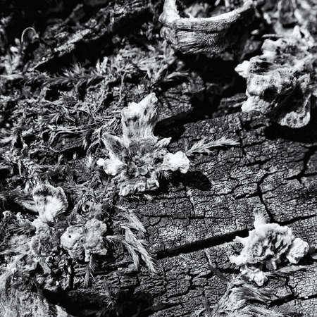 HUBS - Mushrooms on a dead tree trunk Standard-Bild