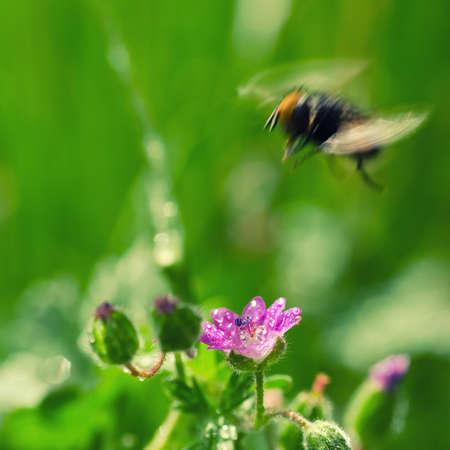 FIELD FLOWERS - Landscape in the spring meadow Standard-Bild