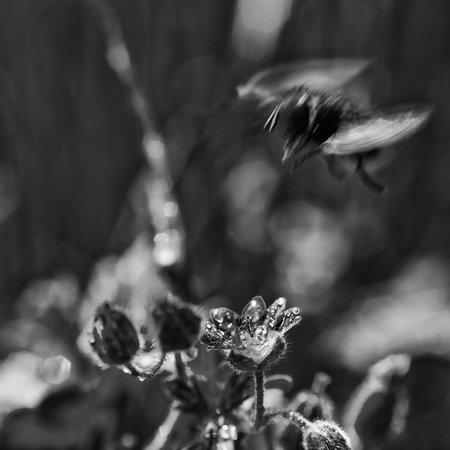 FIELD FLOWERS - Landscape in the spring meadow 版權商用圖片