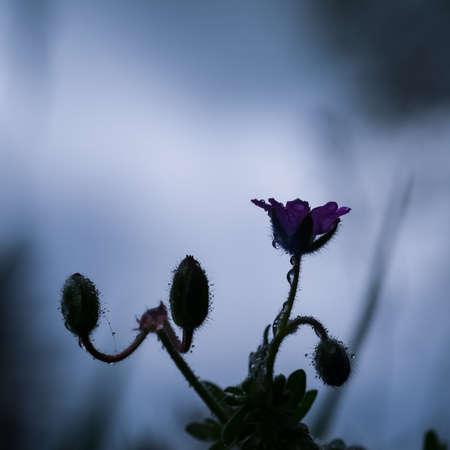 FIELD FLOWERS - Colorful spring in the meadow 版權商用圖片
