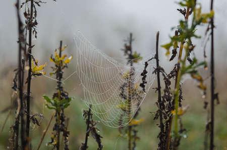 PEARL DROPS ON A COBWEB - Maybe some rain, maybe morning moisture Standard-Bild