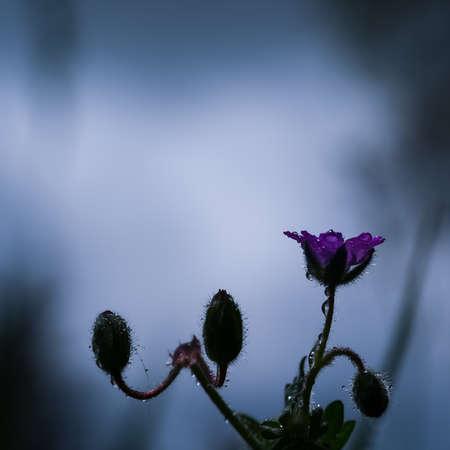 FIELD FLOWERS - Colorful spring in the meadow Standard-Bild