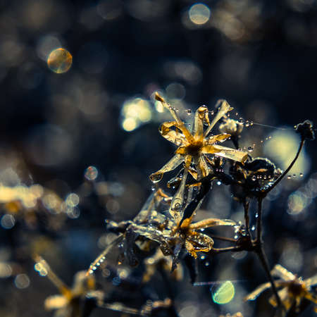 MORNING IN AN AUTUMN MEADOW - Drops of dew on a withered plant in the rays of the sun Standard-Bild