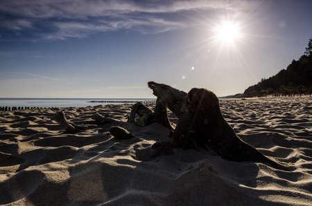 SEA BEACH - Sun over the sea coast