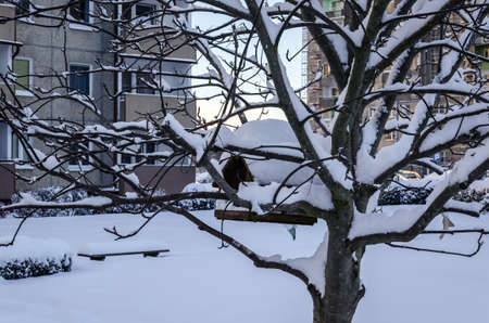 WINTER ATTACK IN THE CITY - A small square in a housing estate and a bird feeder on a tree covered with snow