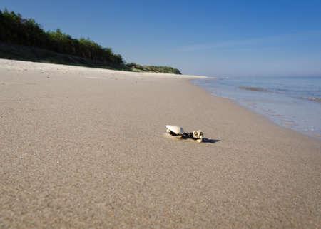 SEA COAST - A small shell washed up on the sea beach