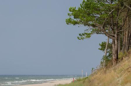 SEA COAST - Beach and pine trees on the cliff 版權商用圖片