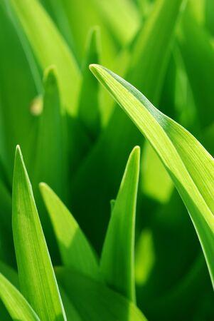 Green nature background Zdjęcie Seryjne - 2635386