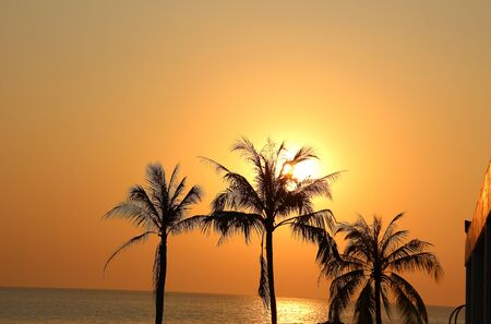 horizon over water: Beautiful sunset over palm trees on the background of the ocean in Thailand.