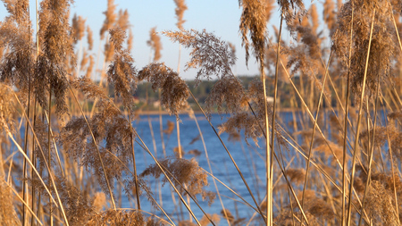Beautiful view of the reeds on the lake
