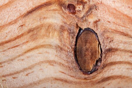 veiny: Details of knot in wood cross section showing growth lines Stock Photo