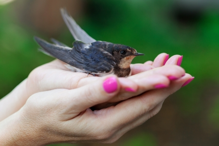 Female hand with a swallow closeup photo