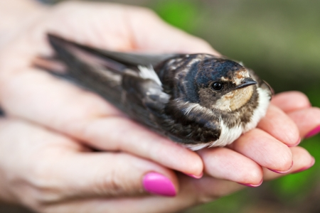 Female hand with a swallow closeup