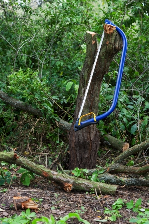 buck teeth: Blue bucksaw with yellow pen on against the cut tree