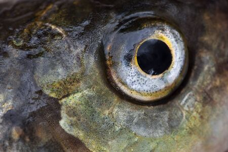 Fish eye close up, abstract background photo