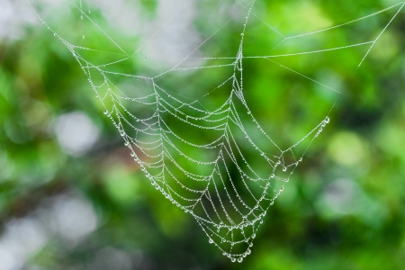 Spider web with dew drops photo