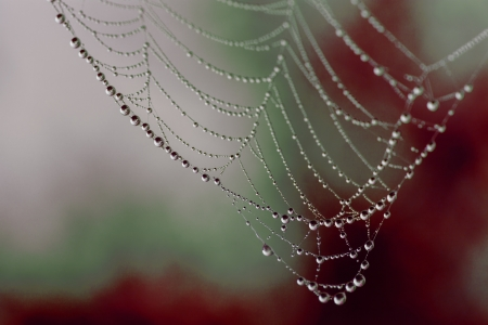 Spider web with dew drops on a bloody background photo