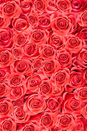 Red natural roses, abstract background Stock Photo - 16308824