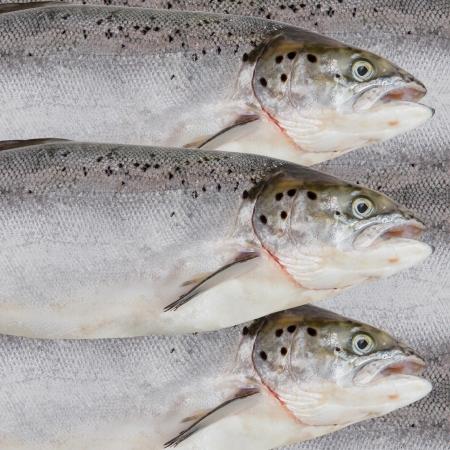 Fresh salmon red fish close up Stock Photo - 16426002