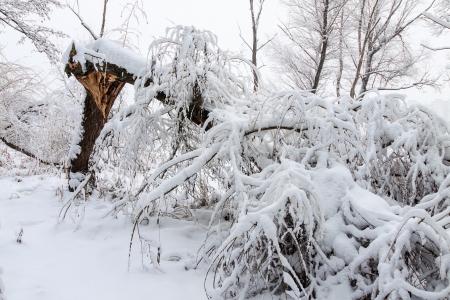 Brach Baum auf die Schwere der gefallenen Schnee Standard-Bild