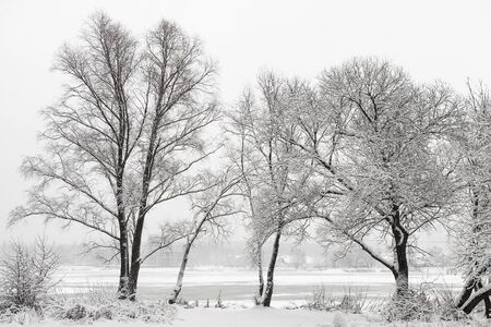 Winter landscape with trees and falling snow photo