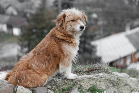 hillock: Mongrel dog sits on hillock looking into the distance