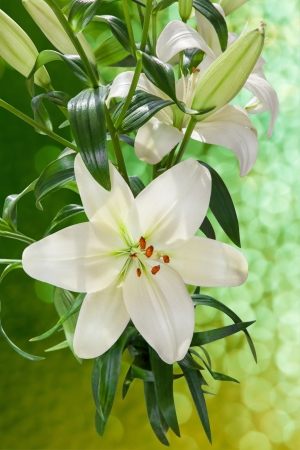 Nature background with white lilies with clipping path