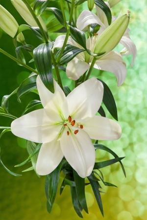 Natur-Hintergrund mit weißen Lilien mit Beschneidungspfad