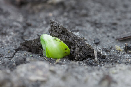 rural development: Birthday of a small plant, green sprout in the ground Stock Photo