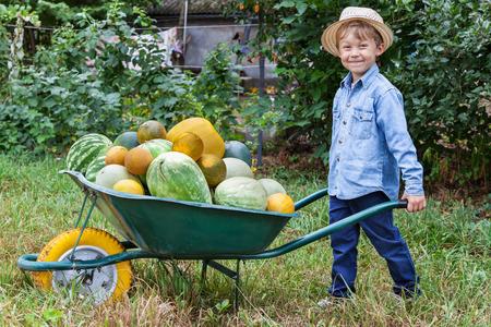 Boy with a full wheelbarrow in garden helps harvest crops photo