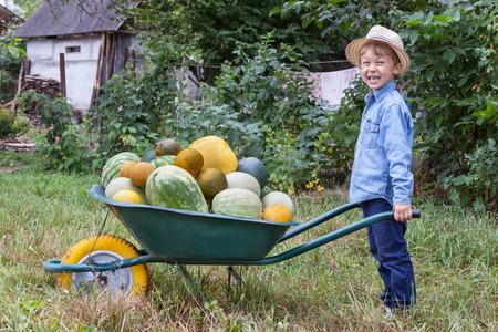 Boy mit einer vollen Schubkarre im Garten hilft Ernten