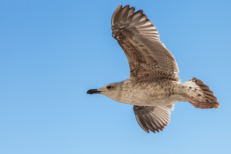 Seagull are flying against the blue sky photo