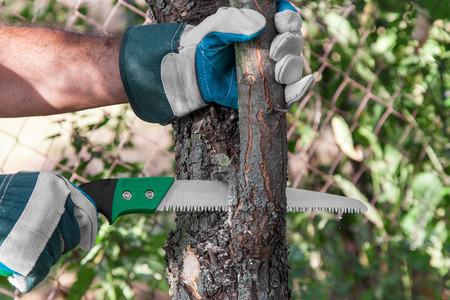 Pruning Gemüsegarten Obstbaum mit einer Metallsäge