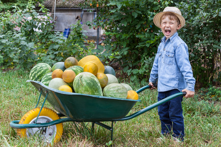 Boy with a full wheelbarrow in garden helps harvest crops