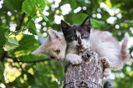 Two young domestic kittens sitting on tree under green leaves