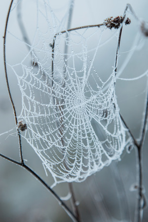 circle pattern: Frozen spider web covered with frost early in the morning
