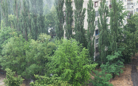 slantwise: Heavy rain across from green trees and residential house in the town Stock Photo