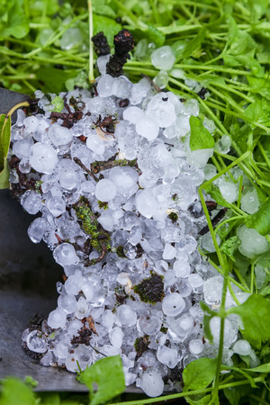 Heap of hailstones on the green grass in the garden