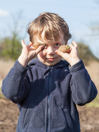 hellion: The boy shows sprouted of potatoes tubers before planting into the soil