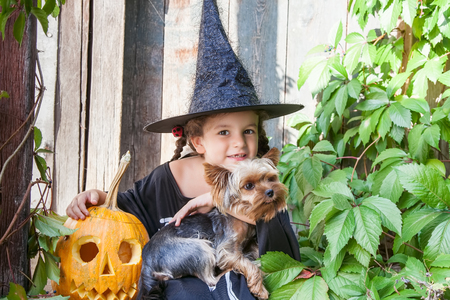 Halloween and celebration concept. Beautiful child girl in witch costume with Halloween pumpkin outdoors holds a dog Yorkshire terrier