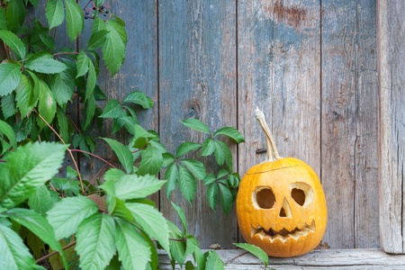 Halloween pumpkin (Jack o lantern) on the background of an old wooden door framed by leaves of wild grapes, ready for text invitation or card for haloween party